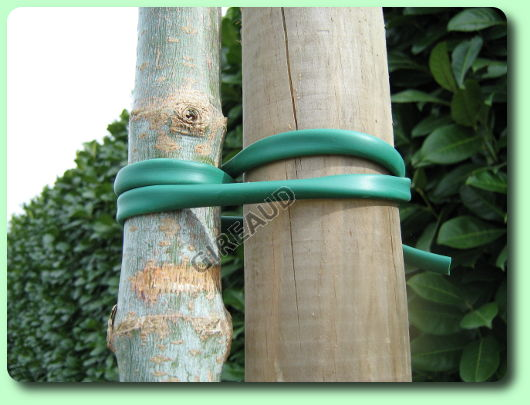Planter un arbre les dossiers - Quand planter un arbre fruitier ...