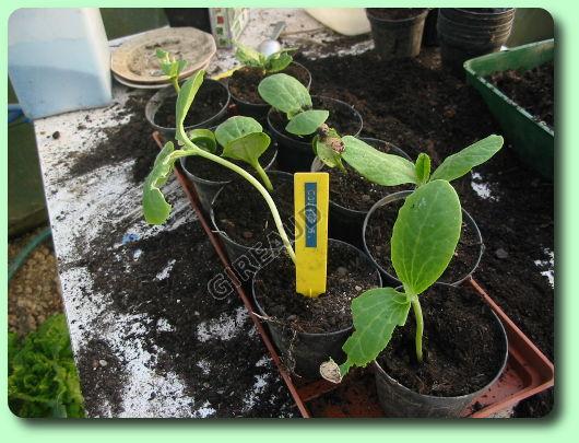 Le semis d 39 int rieur les dossiers - Quand faire les semis ...