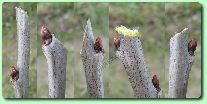 La taille les dossiers - Comment couper les branches d un arbre ...